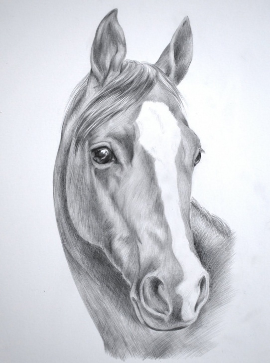 Awesome Horse Pencil Shading Simple Images For > Wild Horse Drawings In Pencil | Art | Horse Pencil Images