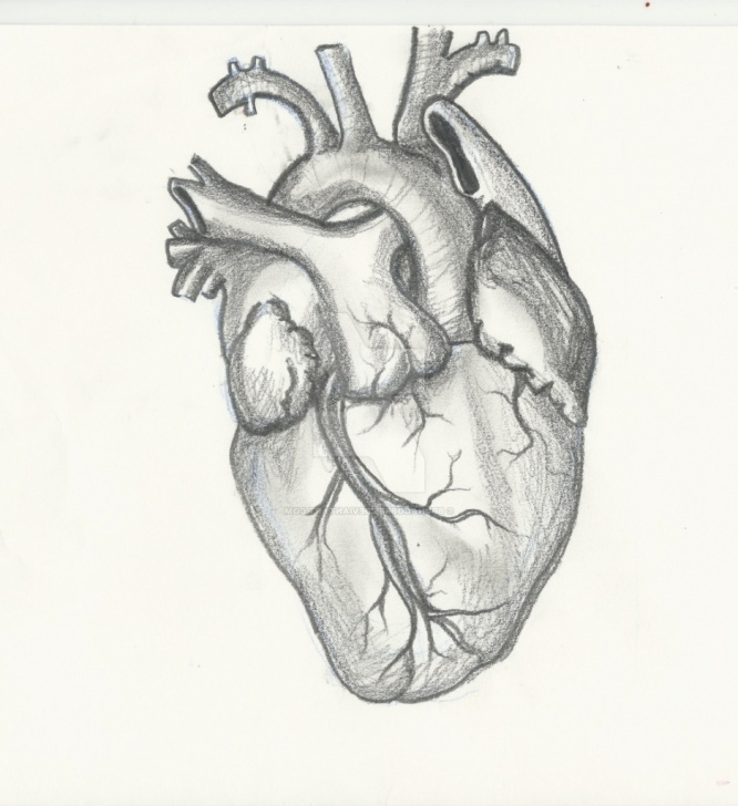 Awesome Human Heart Pencil Drawing Courses Real Human Heart Drawing At Paintingvalley | Explore Collection Images