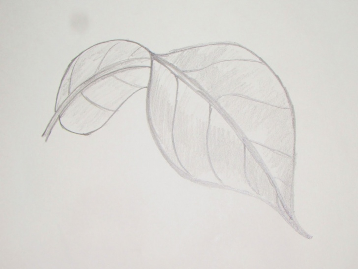 Awesome Leaf Drawings In Pencil Tutorial Leaf Drawings In Pencil At Paintingvalley | Explore Collection Photos