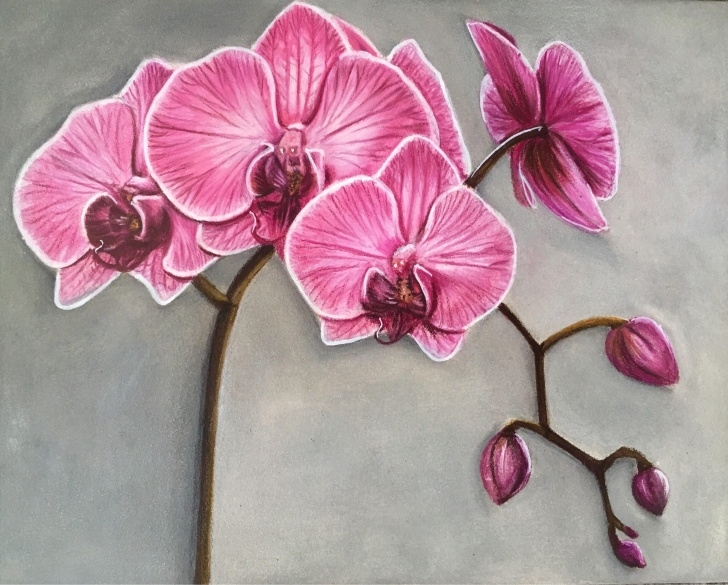 "Awesome Orchid Pencil Drawing Tutorials Original 8X10"" Orchid Colour Pencil Drawing In 2019 