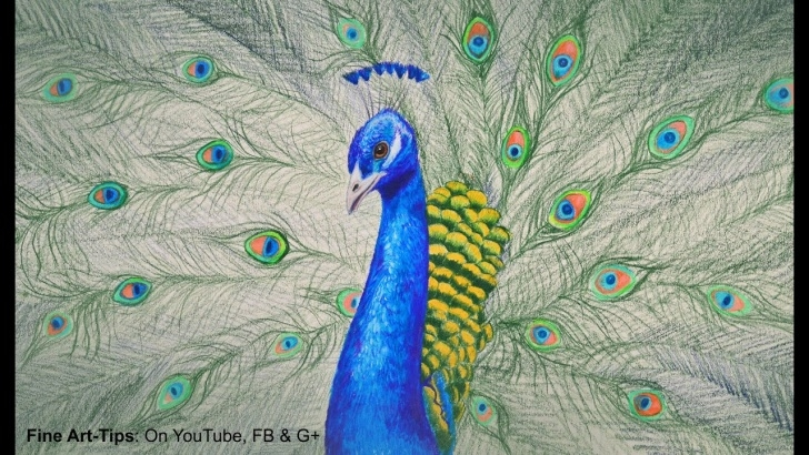 Awesome Peacock Pencil Drawing With Color Techniques for Beginners How To Draw A Peacock With Color Pencils - Drawing Feathers And Birds Images