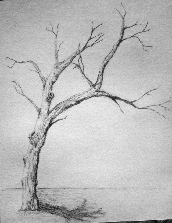 Awesome Pencil Art Tree Free Withered Tree Sketch By Wanderingentity | 1950S Fashion Board For Pic
