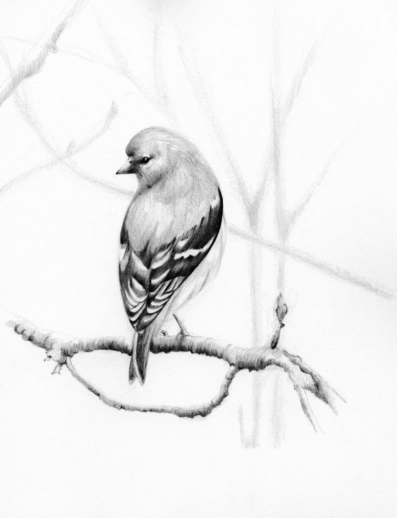 Awesome Pencil Drawing Of Pencil Free Bird Drawing Pencil Drawing Of A Bird Art Print Minimalist Wall Art  Original Art Fine Art Original Print Art Pencil Drawing Original Drawing Picture