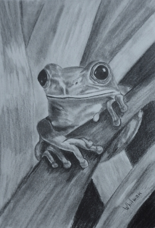 Awesome Pencil Sketch Of Frog Tutorial Tree Frog Sketch. Original Art, Graphite Pencil Drawing By Elena Pictures
