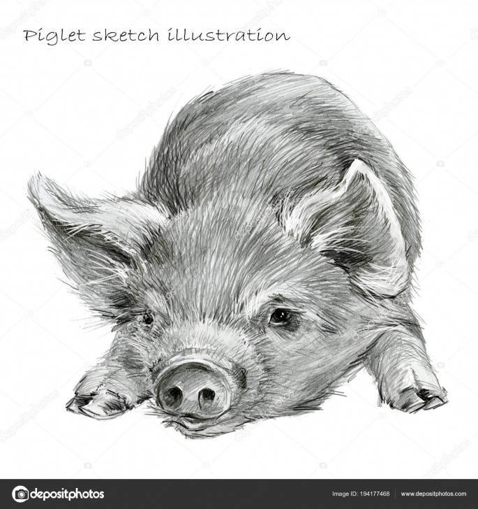 Awesome Pig Pencil Drawing Free Cute Piglet Pig Hand Drawn Pencil Sketch Illustration — Stock Photo Images