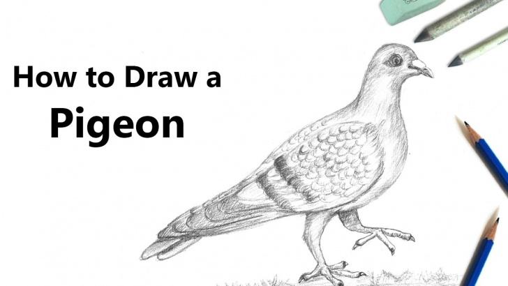 Awesome Pigeon Pencil Sketch Tutorial How To Draw A Pigeon With Pencil [Speed Drawing] Picture
