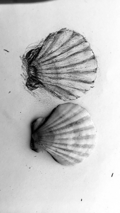 Awesome Seashell Pencil Drawing Free Seashell Pencil Drawing At Paintingvalley | Explore Collection Picture