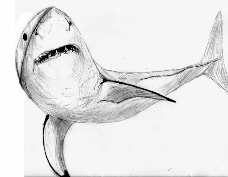 Awesome Shark Pencil Drawing Courses Shark Pencil Drawing At Paintingvalley | Explore Collection Of Pictures