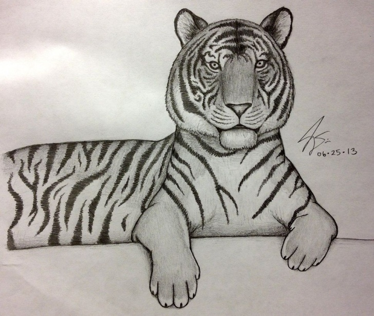 Awesome Tiger Pencil Art Free Photos: Easy Tiger Drawings In Pencil, - Pencil Art Gallery Pictures