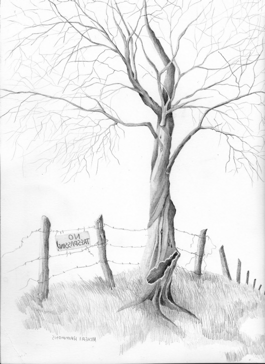 Awesome Tree Pencil Sketch Lessons Tree Sketch Simple At Paintingvalley | Explore Collection Of Pic