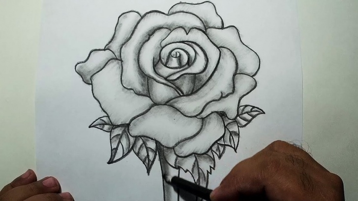 Best 3D Rose Pensil Sketch Step By Step Lessons How To Draw A Rose || Pencil Drawing And Shading Photo