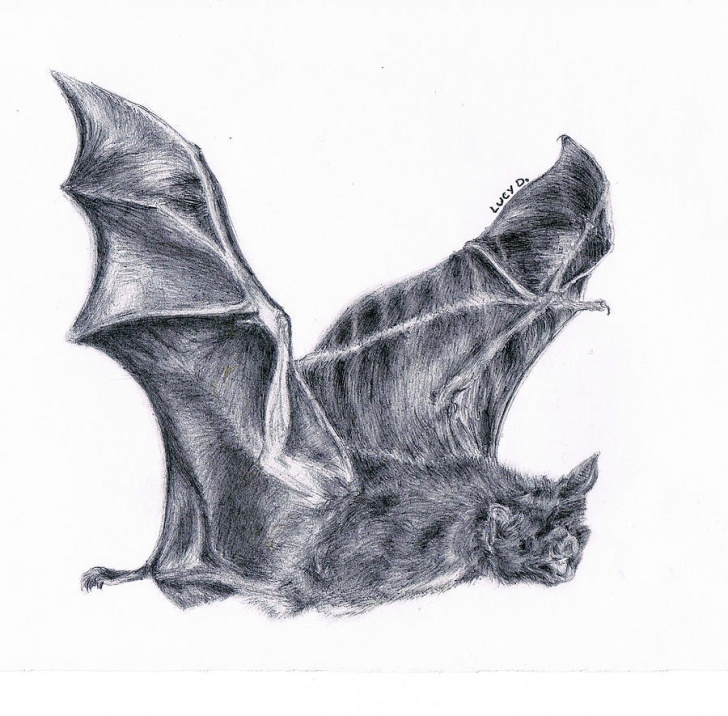 Best Bat Pencil Drawing Free Bat Drawing, Pencil, Sketch, Colorful, Realistic Art Images Pic