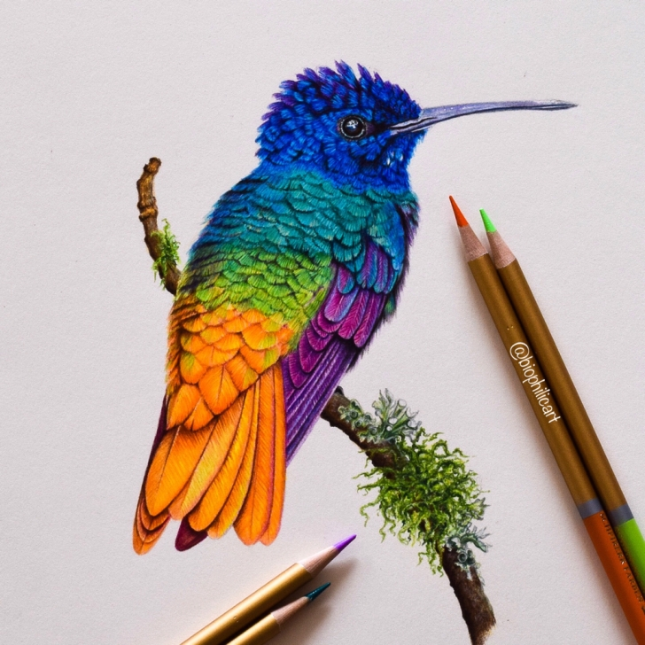 Best Bird Colored Pencil for Beginners Colored Pencil Nature, Wildlife, Animal And Bird Art Images