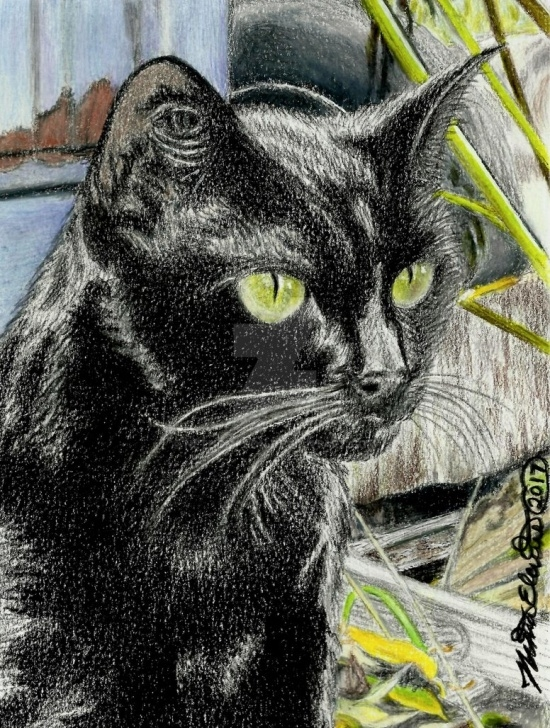 Best Black Cat Pencil Drawing Step by Step Black Cat, Colored Pencil Drawing By Nethompson On Deviantart Pics