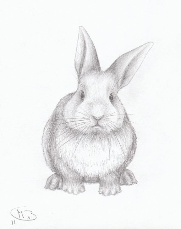 Best Bunny Pencil Drawing Simple Bunny Pencil Drawing At Paintingvalley | Explore Collection Of Pics