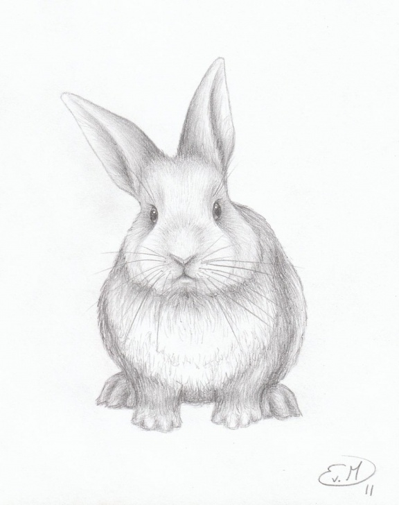 Best Bunny Pencil Drawing Techniques for Beginners Bunny | Pencil Drawing Of My Favorite Animal =) | Evelien Van Photo