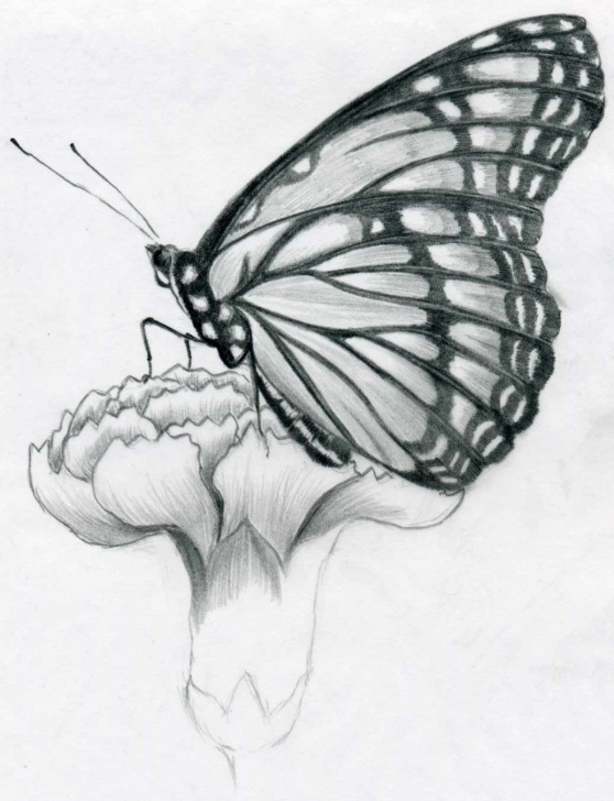 Best Butterfly Pencil Sketch Simple Butterfly Pencil Drawings You Can Practice Images