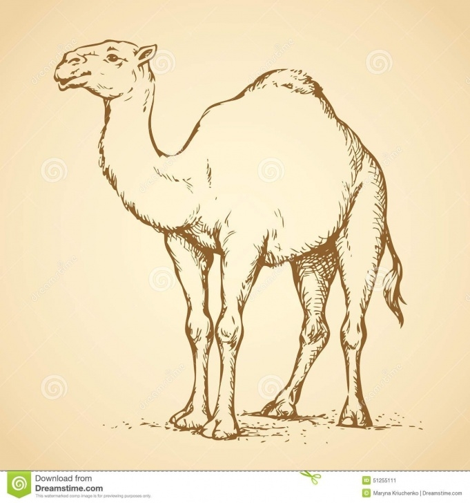 Best Camel Pencil Drawing Easy Camel. Vector Drawing Stock Vector - Image: 51255111 | Animals For Pictures