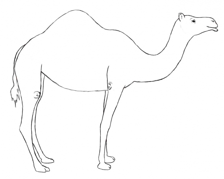 Best Camel Pencil Drawing Free How To Draw A Camel | Draw Central | Drawings, Animal Drawings, Camel Picture