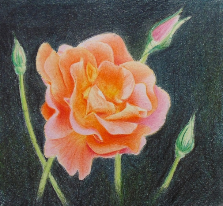 Best Colored Pencil Flower Drawings for Beginners How To Draw A Rose With Colored Pencils — Online Art Lessons Photos