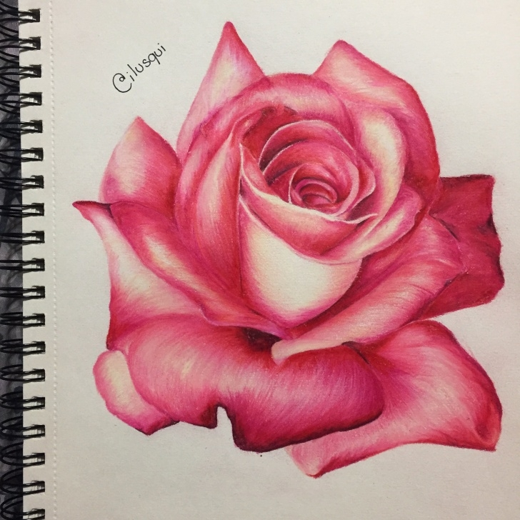 Best Colored Pencil Rose Simple Pink Rose By Diana Carbajal - Prisma Color | Flowers | Colored Pictures
