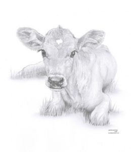 Best Cow And Calf Pencil Drawing Lessons Cow Calf Baby Art Pencil Drawing Invitation | Watercolor | Cow Pics