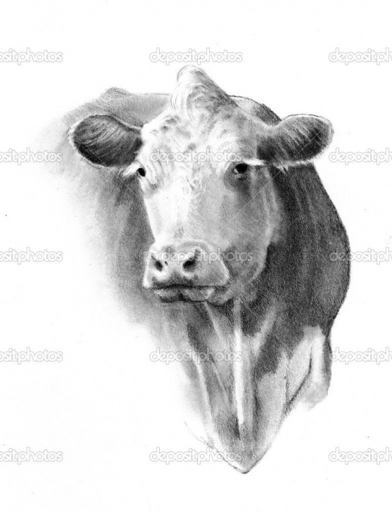 Best Cow Pencil Art Free Pencil Drawing Of A Cow Head | F A R M - Cows In 2019 | Cow Drawing Image