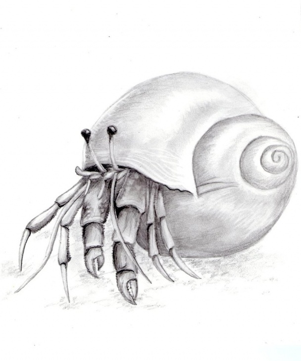 Best Crab Pencil Drawing Courses Crab Drawing, Pencil, Sketch, Colorful, Realistic Art Images Photo