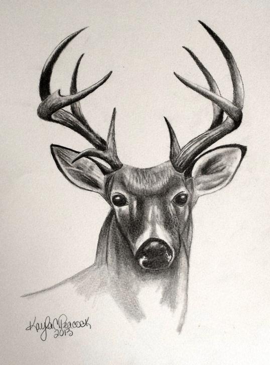 Best Deer Pencil Sketch Ideas Deer Sketches - Bing Images | Deer Sketches | Pencil Drawings Images