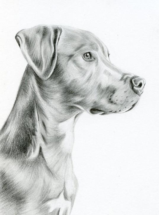 Best Dog Pencil Art Ideas Custom Pencil Drawing, Size 5 X 7, Custom Pet Portrait, Custom Pet Drawing,  Dog Art, Dog Portrait, Dog Pencil Drawing, Graphite, Pet Art Images