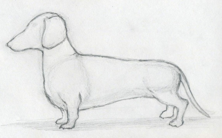 Best Dog Pencil Drawing Easy Techniques for Beginners How To Draw A Dog In Few Simple And Easy To Follow Steps Picture