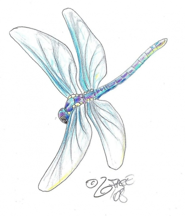 Best Dragonfly Pencil Drawing Courses Dragonfly Pencil Drawing | Illustrations In 2019 | Dragonfly Tattoo Photos