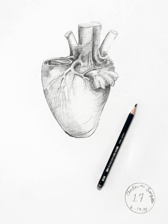 Best Drawings To Copy With Pencil for Beginners Drawing 100 Drawings: Drawing 17 - Christie Lanz Photo