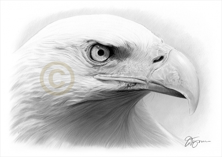 Best Eagle Pencil Drawing Courses Pencil Drawing Of A Bald Eagle By Artist Gary Tymon Images