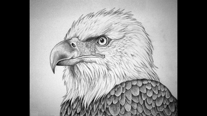 Best Eagle Pencil Drawing Techniques for Beginners Bald Eagle Pencil Sketch At Paintingvalley | Explore Collection Images