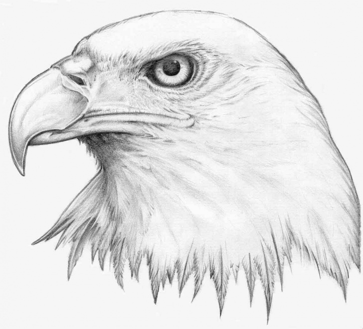 Best Eagle Pencil Sketch Tutorials Flying Eagle Pencil Drawing At Paintingvalley | Explore Pic