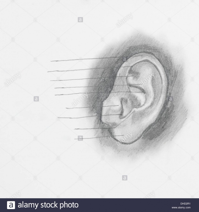 Best Ear Pencil Drawing Simple Detail Of Ear Pencil Drawing On White Paper Stock Photo: 62367845 Pic