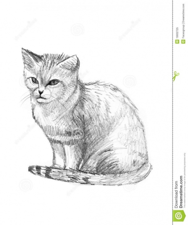 Best Easy Cat Pencil Drawings Step by Step Realistic Cat Pencil Drawing Sketch Easy Simple Free Pic Cheshire Image