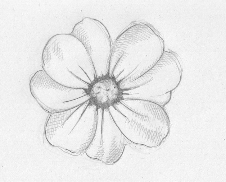 Best Easy Flower Drawings In Pencil for Beginners Pencil Sketch Images Flowers At Paintingvalley | Explore Pictures