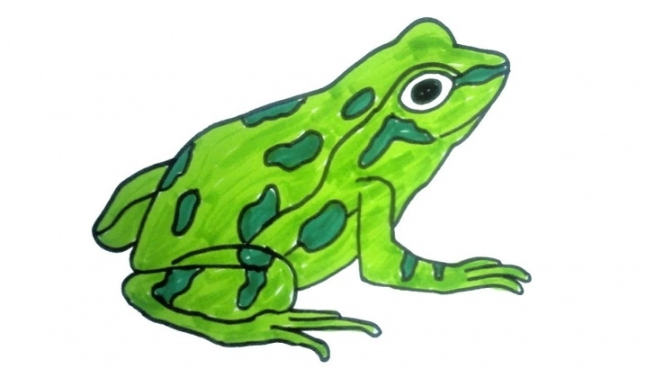 Best Frog Pencil Sketch Simple How To Draw A Frog | Easy Step By Step Drawing For Kids | Children Drawing  And Coloring Pics