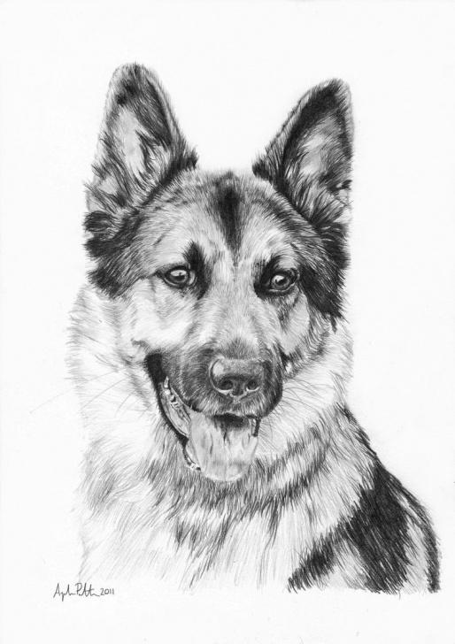 Best German Shepherd Drawings In Pencil Techniques for Beginners 10+ Unique German Shepherd Drawing Sketch Collection - Sketch Images