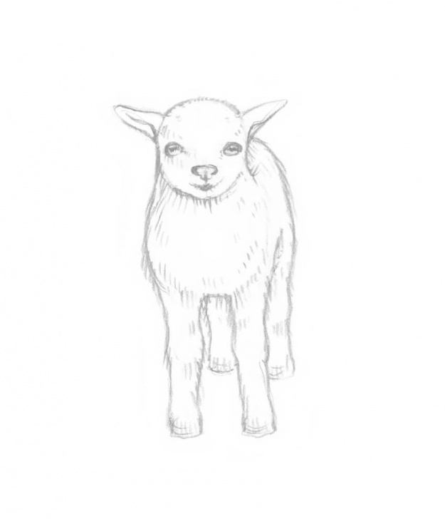 Best Goat Pencil Drawing Simple How To Draw A Goat Step By Step Picture