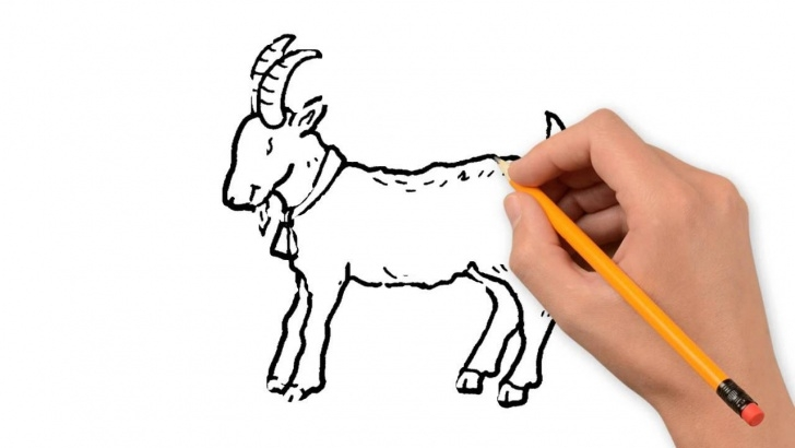 Best Goat Pencil Drawing Tutorial Goat Animals Pencil To Draw Step By Step Pic