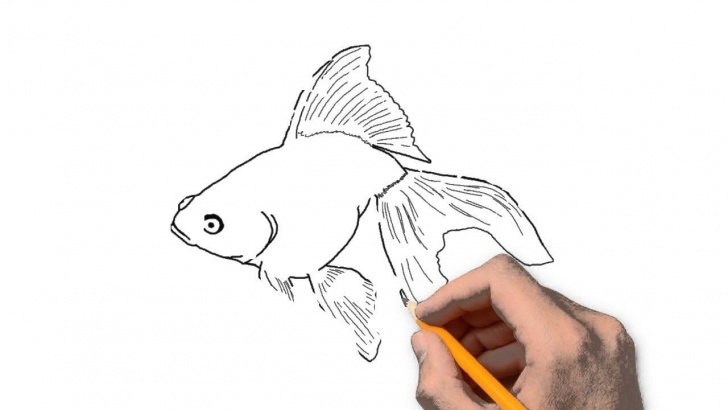 Best Goldfish Pencil Drawing Lessons Goldfish Animals Pencil To Draw Step By Step Images