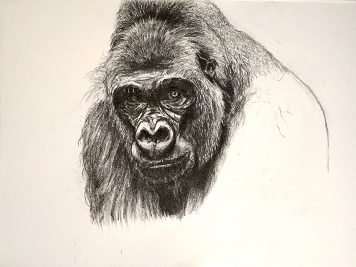 Best Gorilla Pencil Drawing Lessons Gorilla Pic