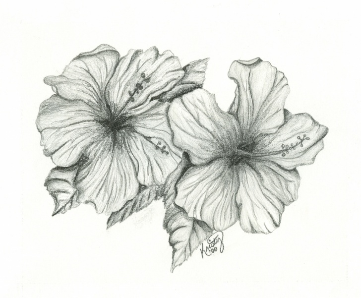 Best Hibiscus Flower Pencil Drawing Courses Hibiscus Flower Pencil Drawing And Drawing Art Of Hibiscus Pencil Pic