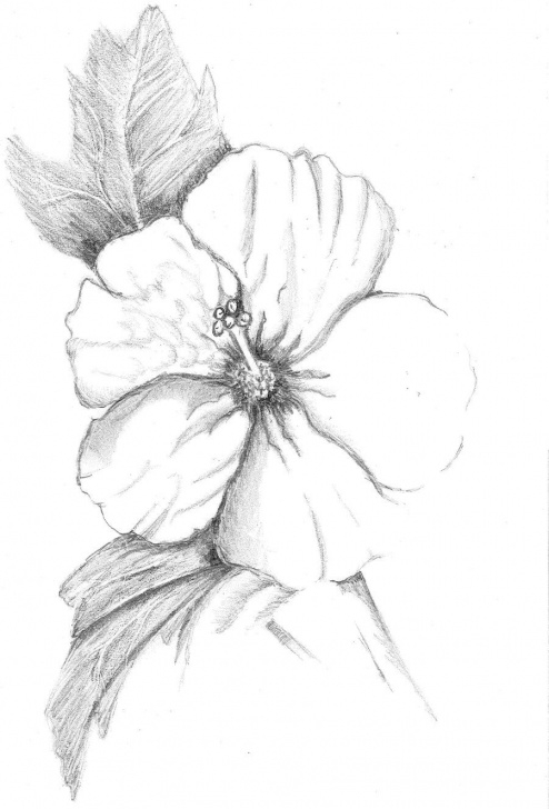 Best Hibiscus Pencil Drawing Step by Step Image Result For Hibiscus Drawing | Diy In 2019 | Hibiscus Drawing Photo