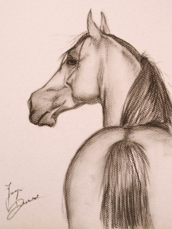 Best Horse Pencil Shading Step by Step Drawing Done With Shading And Charcoal … | Drawings In 2019… Pictures
