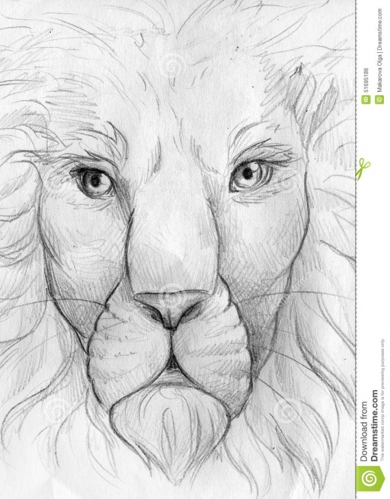 Best Lion Face Pencil Drawing Free Lion Face Pencil Sketch Stock Illustration. Illustration Of Nose Pictures