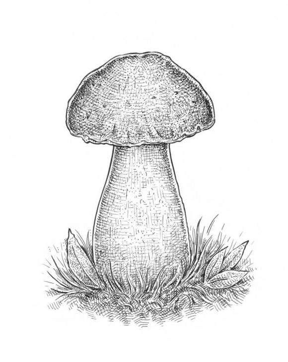 Best Mushroom Drawings Pencil Techniques How To Draw A Mushroom Photos